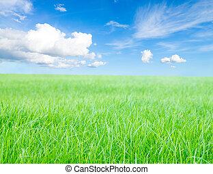 青, 正午, 草の太陽, 下に, 緑のフィールド, sky.