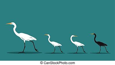 青, 歩くこと, ベクトル, concept., idea., 背景, 動物, 相違, 鳥