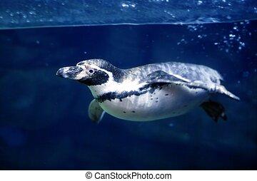 青, 水中, ペンギン, 水泳, 水 の下, 表面, 線, 自然