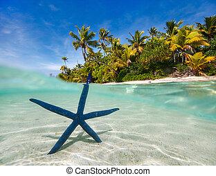 青, 熱帯 浜, ヒトデ