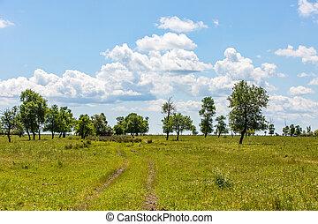 青, 牧草地, 空, 木, 緑, 曇り
