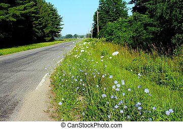 青, 田園, 前方へ, 花, 道
