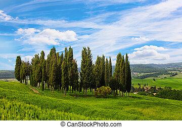 青, 美しい, 空, tuscan, フィールド, 成長する, 糸杉, 風景