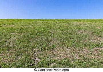 青, 自然, 空, 背景, 緑の草