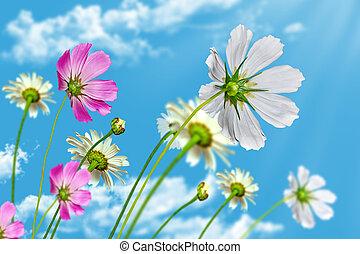 青, 花, 空, 背景, デイジー