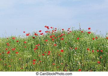 青, 草, 牧草地, 空, 緑, 野生の 花