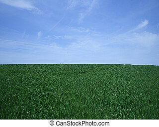 青, 草, 緑の空, 背景