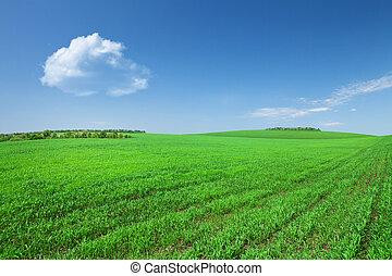 青, 雲, 空フィールド, 緑の草