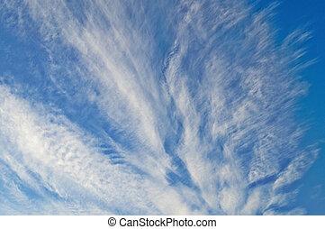 青, 雲, 空, 毛状突起