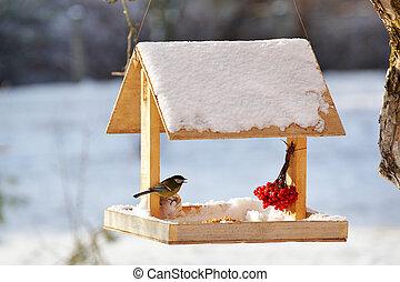 青, 食べること, 庭, 乳房, フィーダー, 鳥