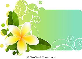 青, frangipani, 旗, tropic, ライト