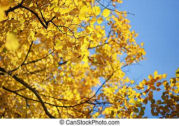 青, sky., 葉, 木, 黄色, 秋, 上に