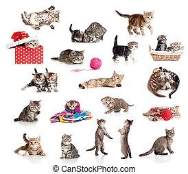 面白い, わずかしか, 子ネコ, collection., 隔離された, ネコ, white., 活動的