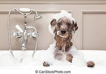 面白い, 取得, 泡, 犬, 浴室