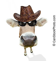 面白い, 牛