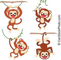 面白い, 猿, 遊び