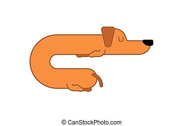 面白い, 線である, 睡眠, pet., 犬, 睡眠, puppy., long., オレンジ, 家, style., ダックスフント