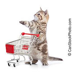 面白い, 買い物, 隔離された, カート, ねこ, 子ネコ