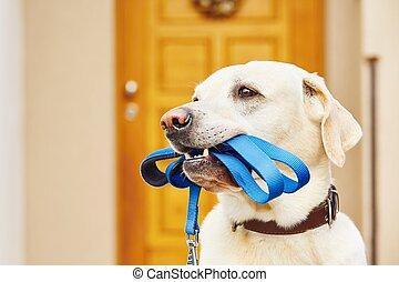 革ひも, 犬