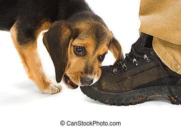 靴子, 情人
