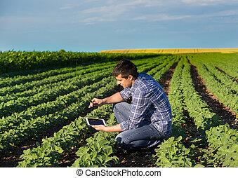 領域, 大豆, 片劑, 農夫