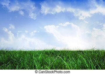 領域, ......的, 草, 在下面, 藍色的天空