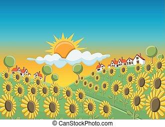 領域, 綠色, 向日葵, 小山