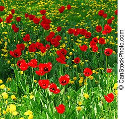 領域, 花