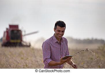 領域, 農夫, 結合, 大豆, 收穫者