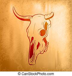 頭骨, 雄牛