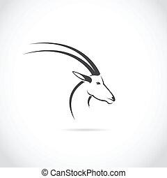頭, ベクトル, 鹿, イメージ, (impala)