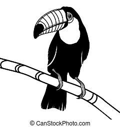 頭, ベクトル, toucan, 鳥, illustratio