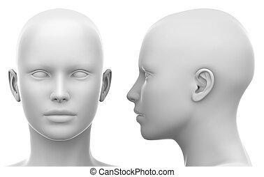 頭, -, 女性, ブランク, 前部, 白, サイド光景