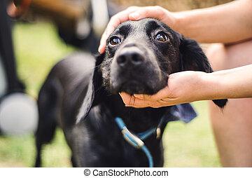 頭, 屋外で, 犬, summertime., 手を持つ, close-up., マレ