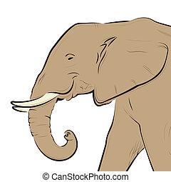頭, 白, 隔離された, 図画, 象