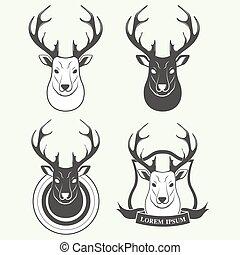 頭, 白, 鹿, 隔離された, 背景