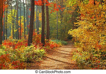顏色, ......的, 秋天