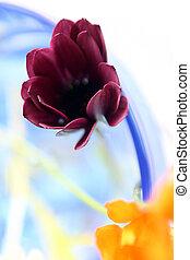 顏色, 花