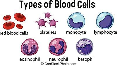 類型, ......的, 血液細胞