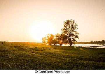 领域, 在上, 日落