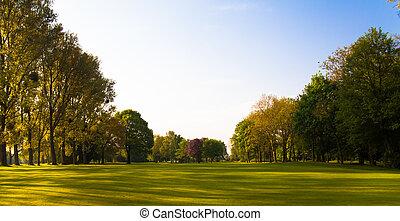 领域, 绿色, 树。