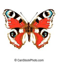 颜色, 蝴蝶, 在上, a, 白色