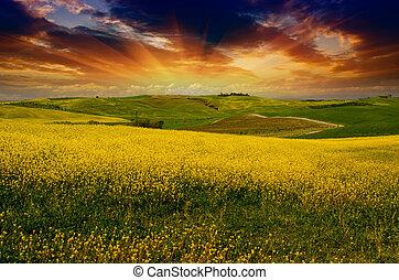 風景, そして, 牧草地, の, トスカーナ, 春シーズン