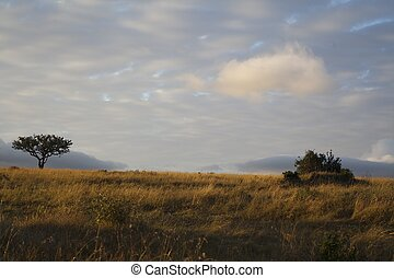 風景, の, ∥, サバンナ, 中に, kenya