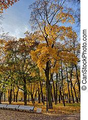 風景, 中に, 秋, 公園