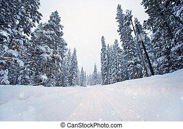 風景, 冬天, 路