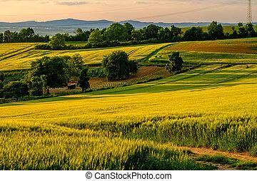 風景。, 小山, 震動, 領域, 農田, 顏色, 綠色, 鄉村, 滾動, 新鮮, sunset.