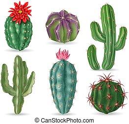 風景, 植物, サボテン, メキシコ人, みずみずしい, 装飾用である, サボテン, 3d, 隔離された, 砂漠, 現実的, 家, interior., セット, cactus., ベクトル