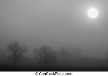 風景, 由于, 霧