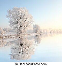 風景, ......的, 冬天樹, 在, 黎明